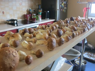 Grybai / Mushrooms